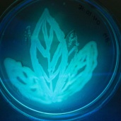 UV2 CNRG MEGF art-science